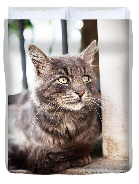 Cat #2480 Duvet Cover