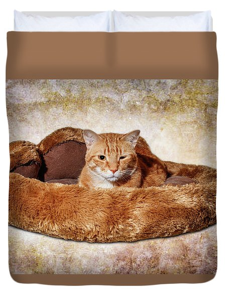 Cat Bed Duvet Cover by Doug Long