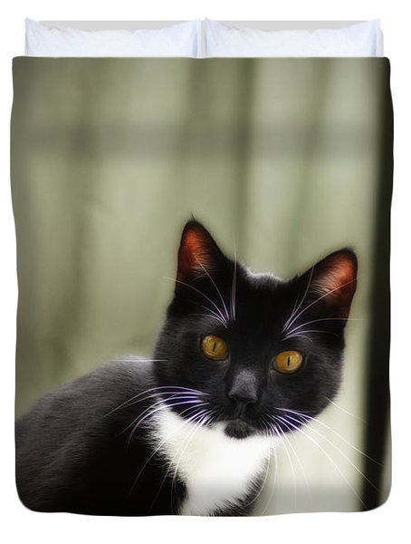 Cat Cat Duvet Cover by Bill Cannon