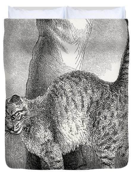 Cat In An Affectionate Frame Of Mind Duvet Cover