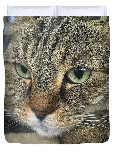 Cat Looking Outdoors Duvet Cover