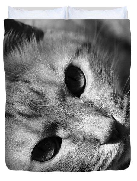 Cat Naps Duvet Cover