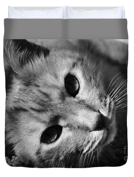 Cat Naps Duvet Cover