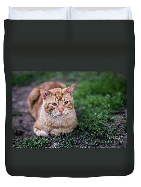 Duvet Cover featuring the photograph Cat On Genoves Park Cadiz Spain by Pablo Avanzini