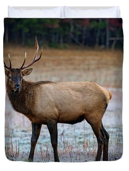 Cataloochee Elk Duvet Cover