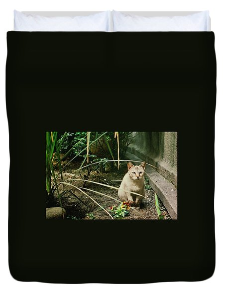 Cats Are Amazing Ll  Duvet Cover