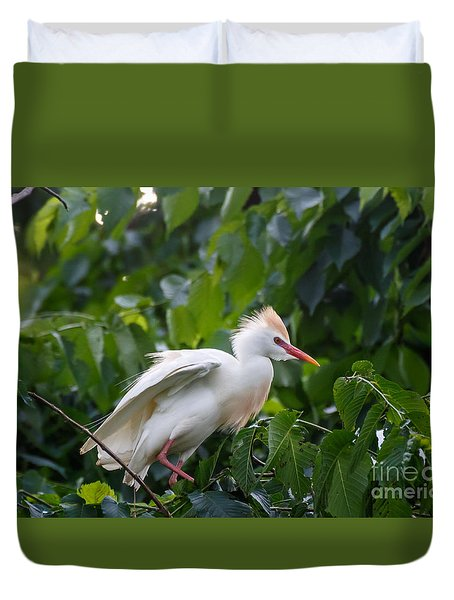 Cattle Egret At Rest Duvet Cover