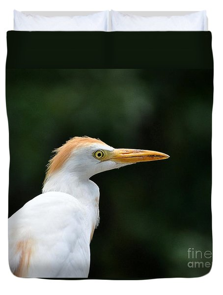 Cattle Egret Close-up Duvet Cover by Al Powell Photography USA