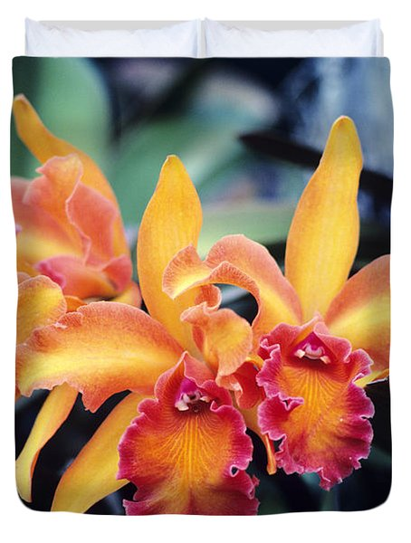 Cattleya Orchids Duvet Cover by Allan Seiden - Printscapes