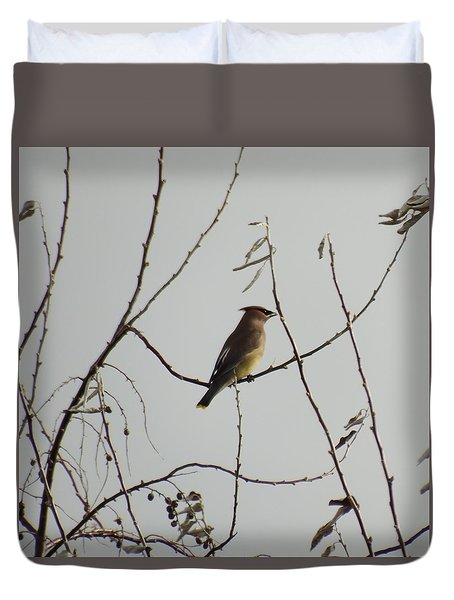 Cedar Wax Wing In Tree Duvet Cover