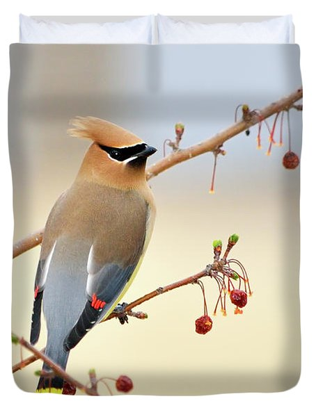 Cedar Waxwing Duvet Cover by Betty LaRue