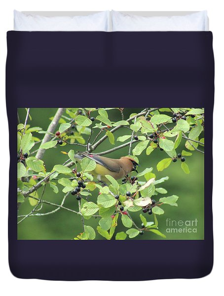 Cedar Waxwing Eating Berries Duvet Cover
