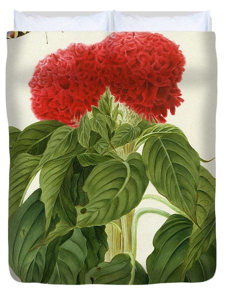 Celosia Argentea Cristata And Butterfly Duvet Cover