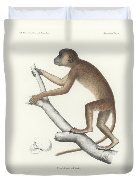 Central Yellow Baboon, Papio C. Cynocephalus Duvet Cover