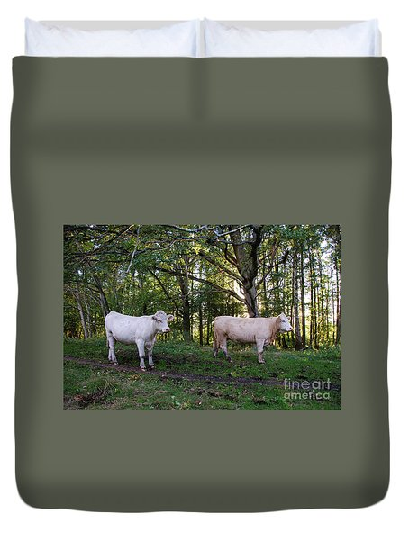 Duvet Cover featuring the photograph Charolais Cattle In A Green Forest by Kennerth and Birgitta Kullman