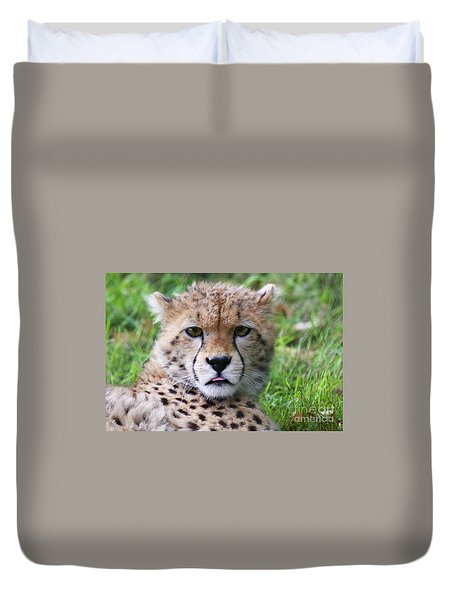 Duvet Cover featuring the photograph Cheetah by MGL Meiklejohn Graphics Licensing