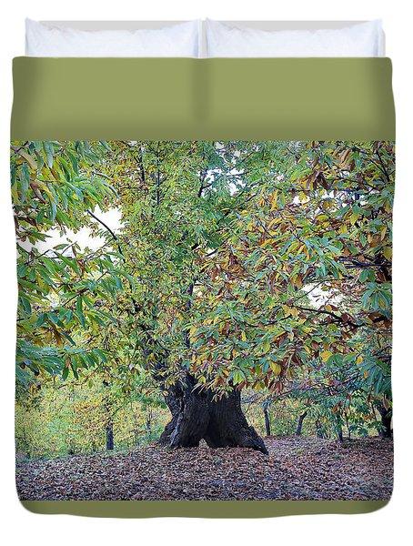 Chestnut Tree In Autumn Duvet Cover