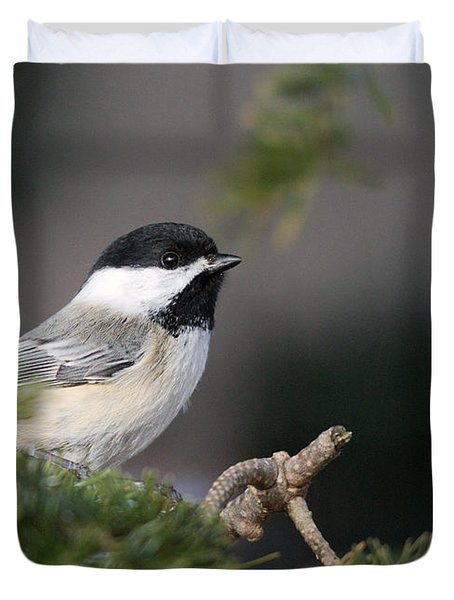Duvet Cover featuring the photograph Chickadee In Balsam Tree by Susan Capuano