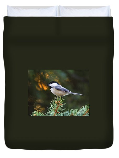 Chickadee In Spruce  Duvet Cover
