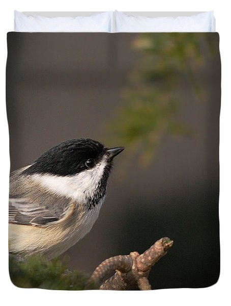 Duvet Cover featuring the photograph Chickadee In The Shadows by Susan Capuano
