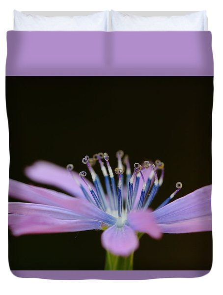Chicory Duvet Cover by Richard Patmore