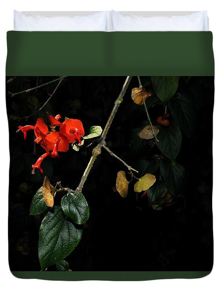 Chinese Hat Plant Duvet Cover