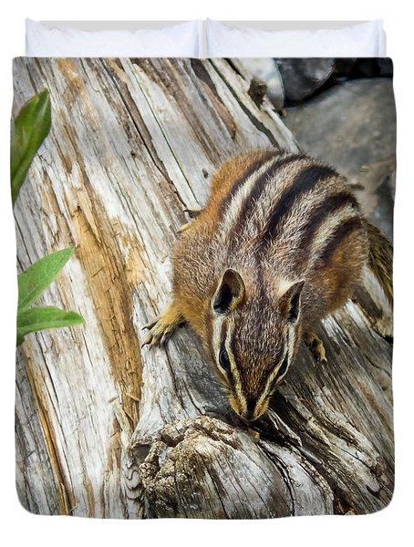 Chipmunk On A Log Duvet Cover