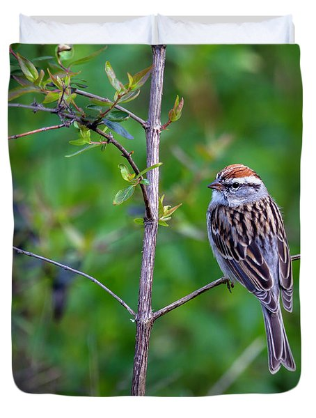 Chipping Sparrow Duvet Cover