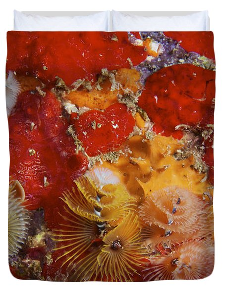 Christmas Tree Worms, Bonaire Duvet Cover by Terry Moore
