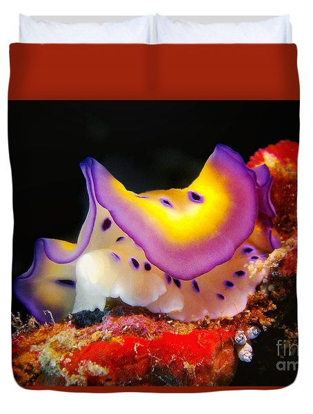 Chromodoris Kunei Nudibranch  Duvet Cover
