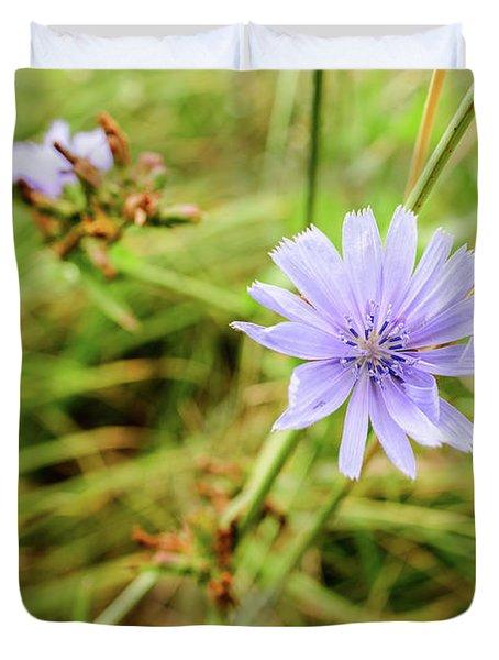 Cichorium Intybus, Chicory Duvet Cover