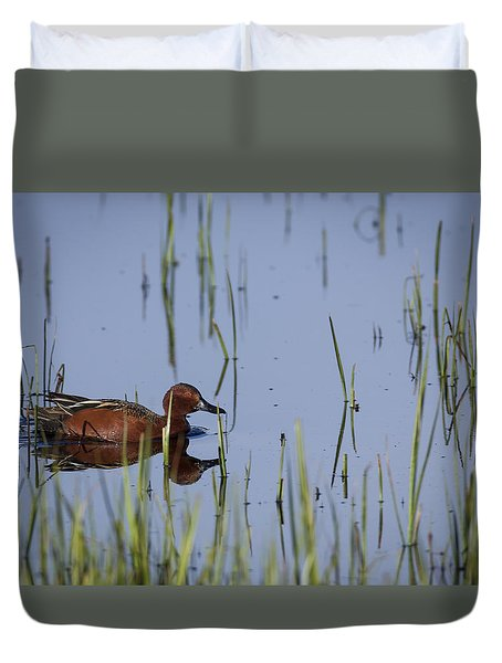 Cinnamon Teal Adult Male Duvet Cover