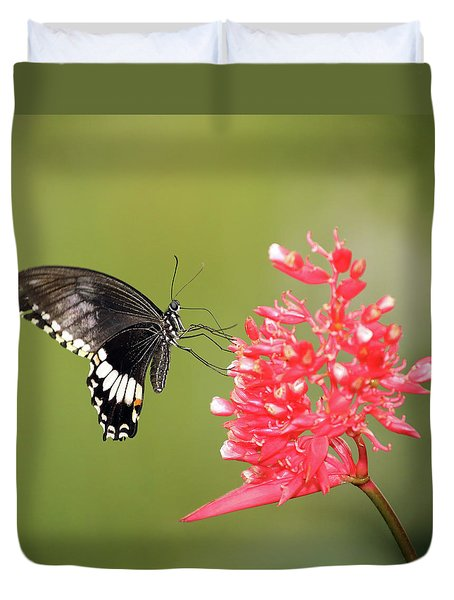 Duvet Cover featuring the photograph Citrus Swallowtail by Grant Glendinning