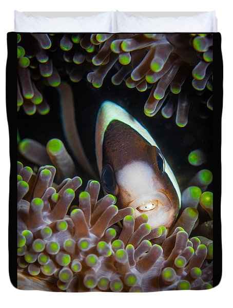 Clarks Anemone Fish Duvet Cover