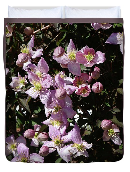 Clematis Montana  In Full Bloom Duvet Cover