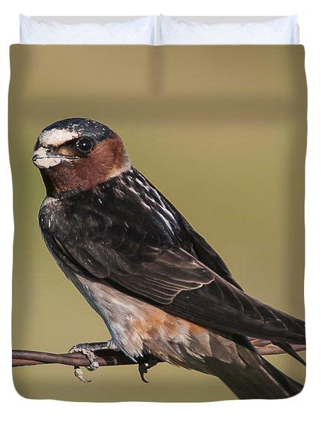 Cliff Swallow Duvet Cover