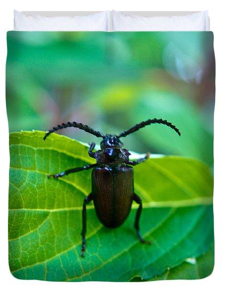 Climbing Beetle Duvet Cover