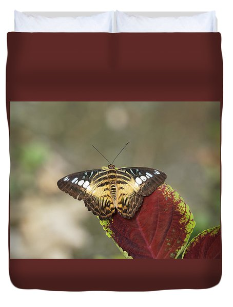 Duvet Cover featuring the photograph Clipper Butterfly by Paul Gulliver