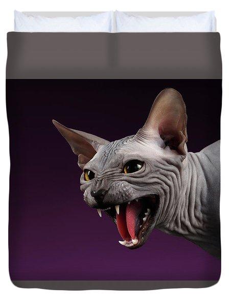 Close-up Aggressive Sphynx Cat Hisses On Purple Duvet Cover