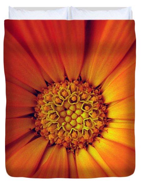 Close Up Of An Orange Daisy Duvet Cover