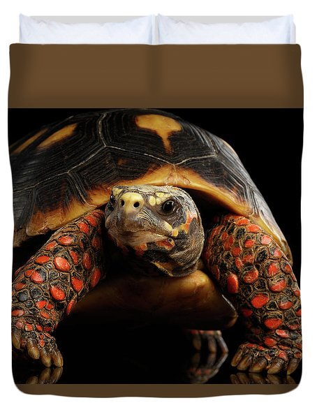 Close-up Of Red-footed Tortoises, Chelonoidis Carbonaria, Isolated Black Background Duvet Cover by Sergey Taran