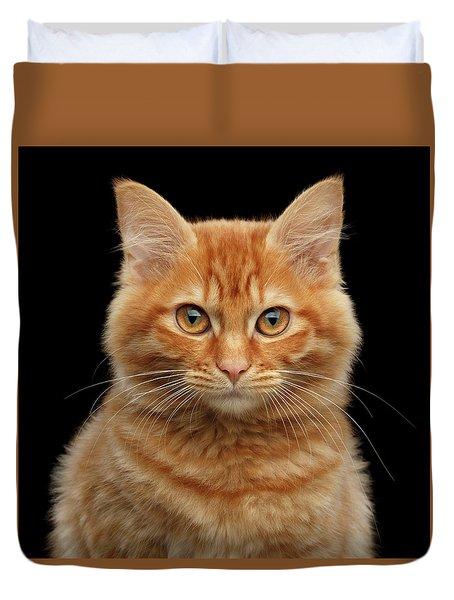 Close-up Portrait Of Ginger Kitty On Black Duvet Cover