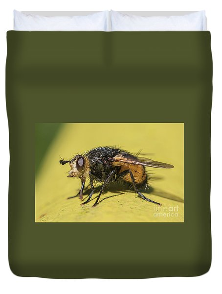 Close Up - Tachinid Fly - Nowickia Ferox Duvet Cover