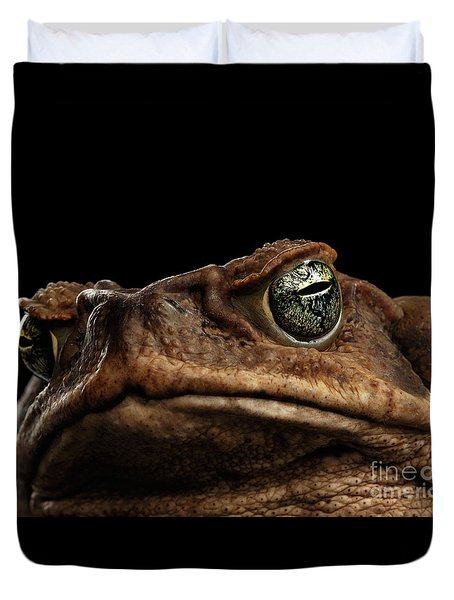 Closeup Cane Toad - Bufo Marinus, Giant Neotropical Or Marine Toad Isolated On Black Background Duvet Cover