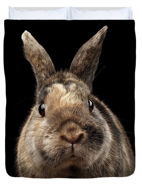 Closeup Funny Little Rabbit, Brown Fur, Isolated On Black Backgr Duvet Cover