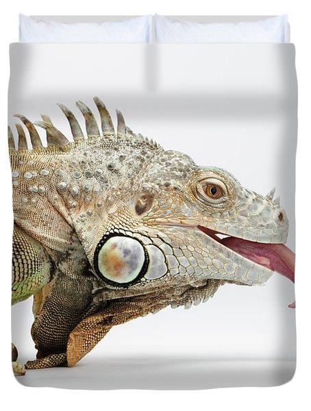 Closeup Green Iguana Showing Tongue On White Duvet Cover