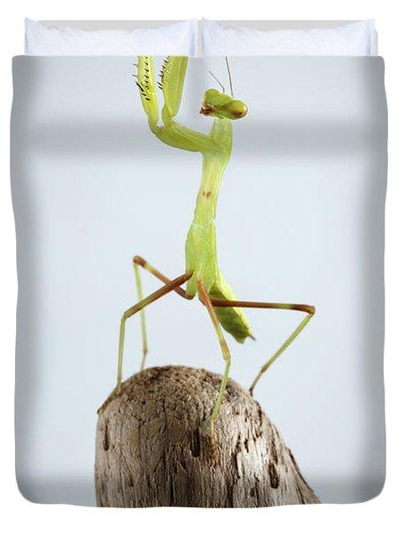 Closeup Green Praying Mantis On Stick Duvet Cover