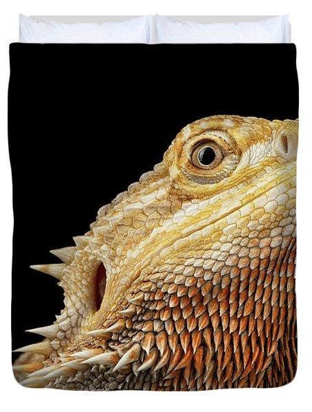 Closeup Head Of Bearded Dragon Llizard, Agama, Isolated Black Background Duvet Cover