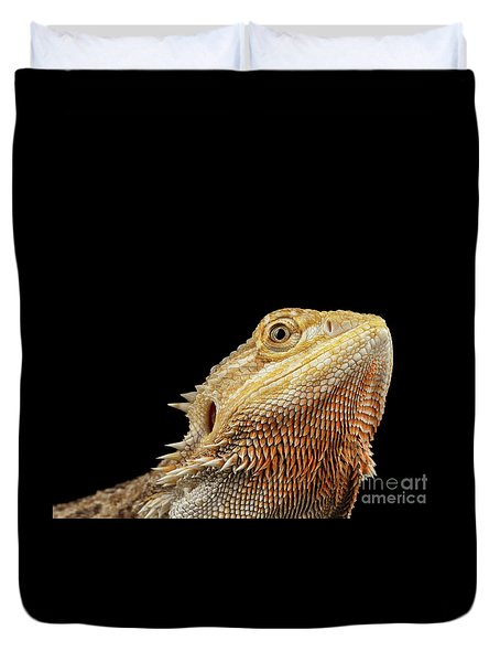 Closeup Head Of Bearded Dragon Llizard, Agama, Isolated Black Background Duvet Cover by Sergey Taran