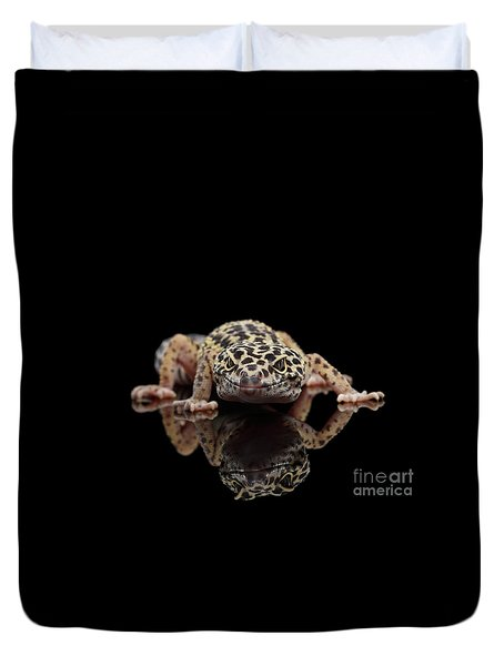 Closeup Leopard Gecko Eublepharis Macularius Isolated On Black Background, Front View Duvet Cover by Sergey Taran